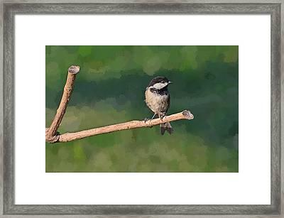 Chickadee On A Stick Framed Print by Debbie Portwood