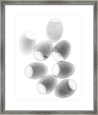 Chicken Eggs Framed Print