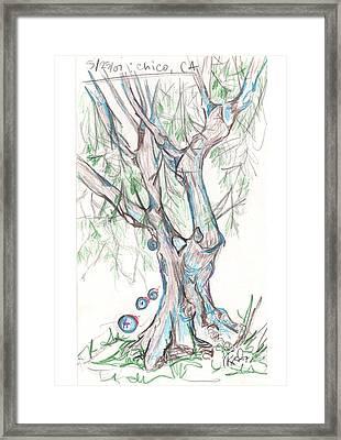 Chico Ca River Tree Framed Print by Carol Rashawnna Williams