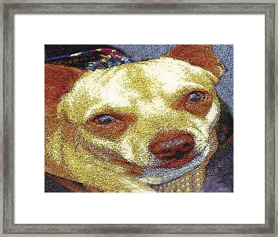 Chihuahua Framed Print by Alice Ramirez