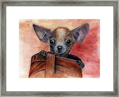 Chihuahua Puppy Framed Print by Katerina A Cechova