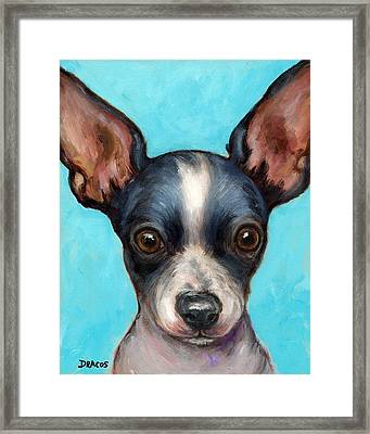 Chihuahua Puppy With Big Ears Framed Print