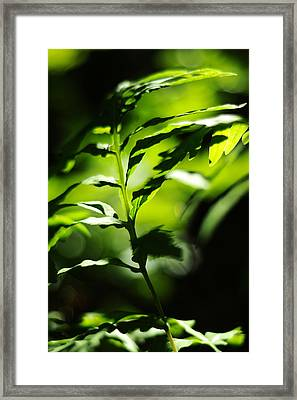 Child Of The Wind Framed Print by Rebecca Sherman