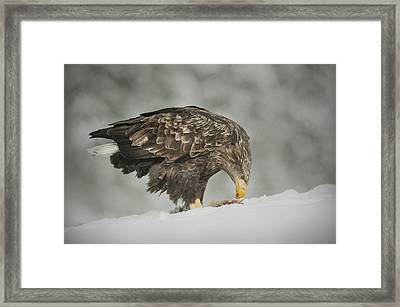 Chilled Dinner Framed Print by Andy Astbury