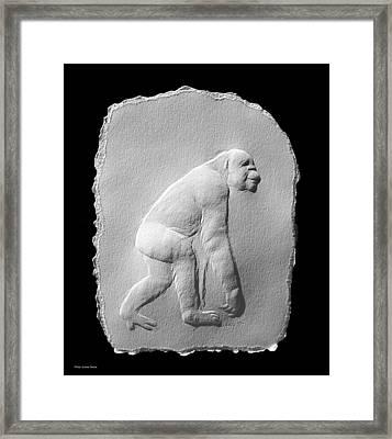Chimp Framed Print by Suhas Tavkar