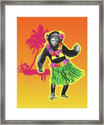 Chimpanzee Hula Dancing Framed Print