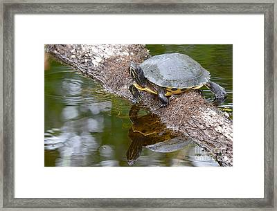 Chin Up  Framed Print by Kathy Gibbons
