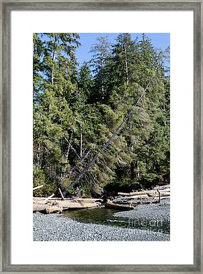 China Creek China Beach Juan De Fuca Provincial Park Bc Canada Framed Print by Andy Smy