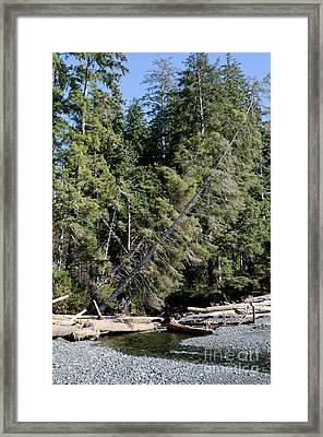 China Creek China Beach Juan De Fuca Provincial Park Bc Canada Framed Print