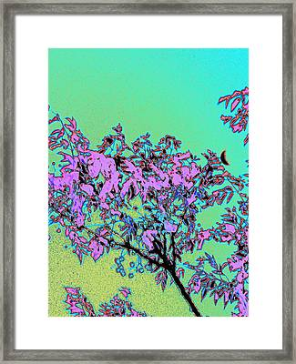 Chinaberry Moon Framed Print