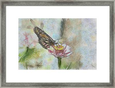 Chinese Butterfly Framed Print by Trish Tritz