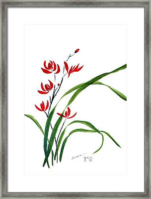 Chinese Wild Orchid 1 Framed Print by Alethea McKee