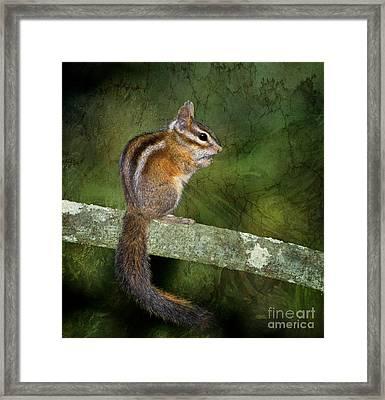 Chipmunk In The Forest Framed Print