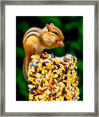 Chipmunk Take Out Framed Print by Ms Judi