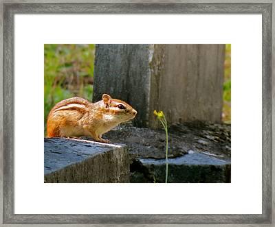 Chipmunk With Flower Framed Print
