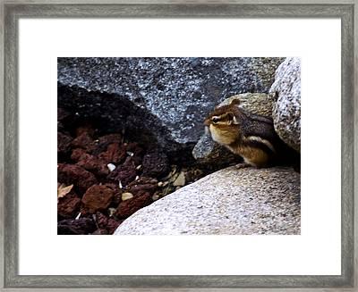 Chipper Cheeks On The Rocks Michigan Framed Print by LeeAnn McLaneGoetz McLaneGoetzStudioLLCcom