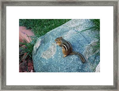 Chippy Framed Print by LeeAnn McLaneGoetz McLaneGoetzStudioLLCcom