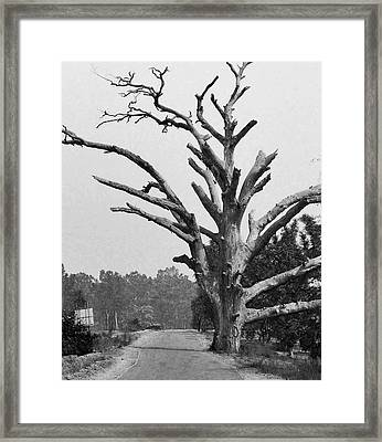 Chiseled Tree In Highway Framed Print by Sumit Mehndiratta