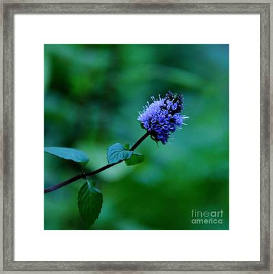 Chocolate Mint Bloom Framed Print