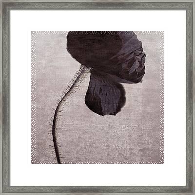 Chocolate Poppy Framed Print by Bonnie Bruno
