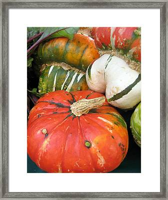 Framed Print featuring the photograph Choice Squash by Kathy Bassett