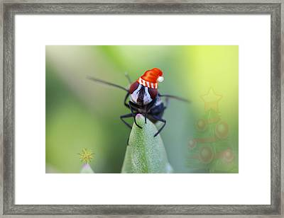 Christmas Blow Fly Framed Print by Ronel Broderick