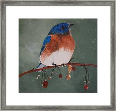 Christmas Bluebird Framed Print by Betty-Anne McDonald