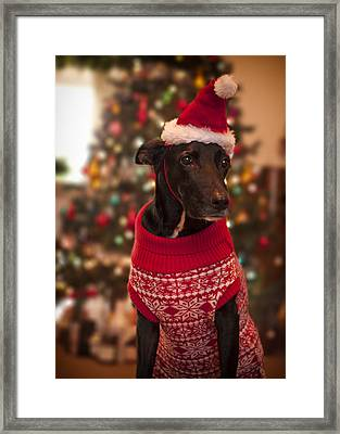 Christmas Dressed Up Dog Framed Print by Malcolm Smith