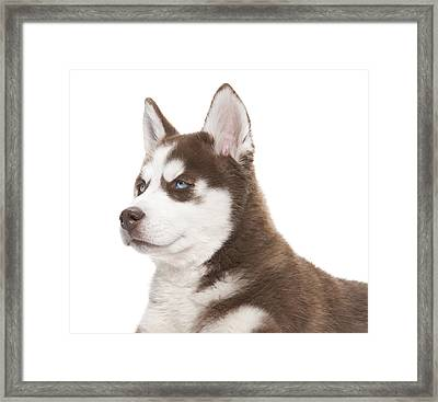 Christmas Holiday Puppy Portrait Framed Print