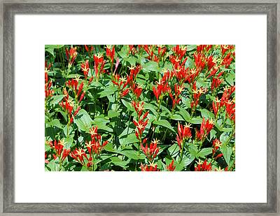 Christmas In July Framed Print by
