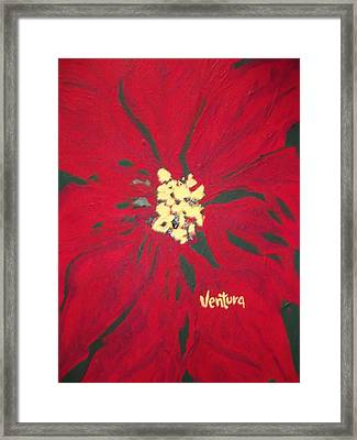 Christmas Pointsietta Framed Print