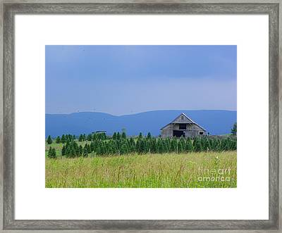 Framed Print featuring the photograph Christmas Tree Farm by Eve Spring