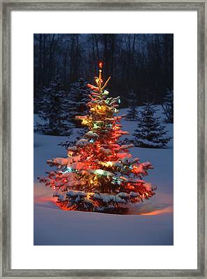 Christmas Tree With Lights Outdoors In Framed Print by Carson Ganci