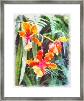 Chromaticorchids Framed Print by Anthony Caruso