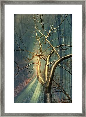 Chrome Forest Framed Print by Marty Koch