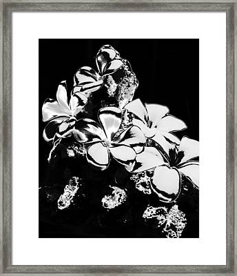 Chrome Plumeria Framed Print by Elizabeth  Doran