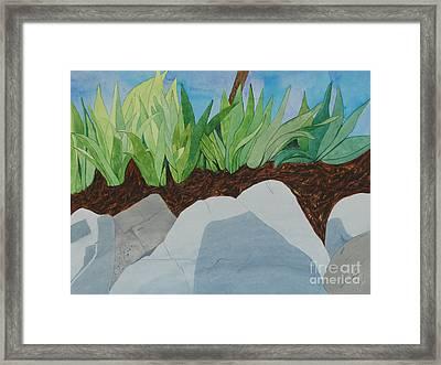 Chromitic Iris Framed Print by Jennifer Taylor Rogerson