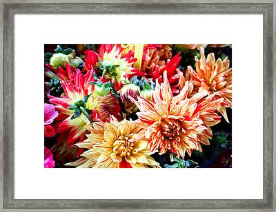 Chrysanthemum Blooms Framed Print by Tony Grider