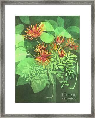 Chrysanthemums Framed Print by Anne Havard