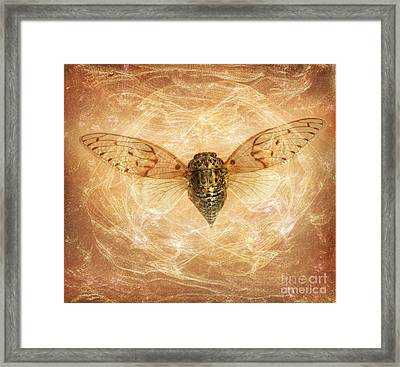 Cicada In Amber Framed Print