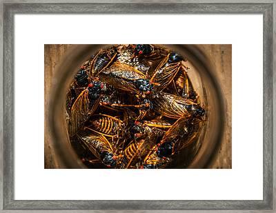 Cicada Madness Framed Print