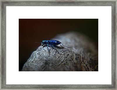 Cicindellidae A Family Of Preditors Framed Print by Douglas Barnett