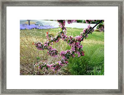 Circle Of Blossoms Framed Print