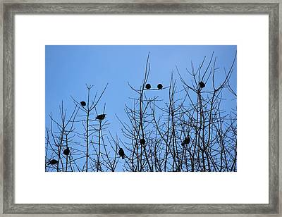 Circle Of Friends Framed Print by Kume Bryant