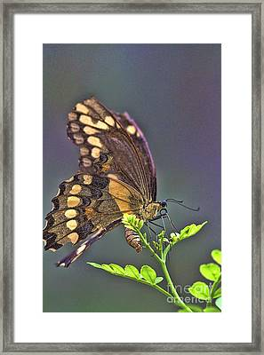 Framed Print featuring the photograph Circle Of Life by Anne Rodkin