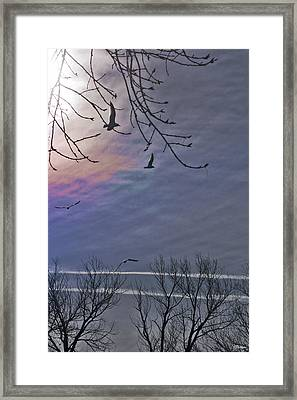 Circling Framed Print by Kat Besthorn
