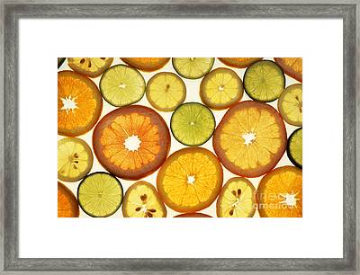 Citrus Slices Framed Print by Photo Researchers
