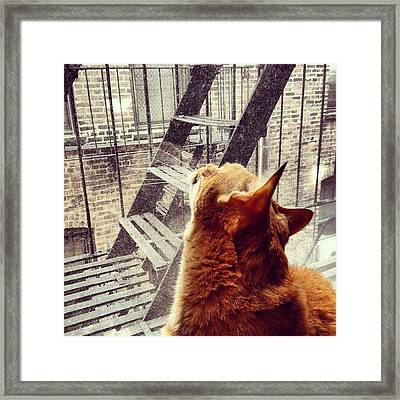 City Cat And Fire Escapes Framed Print
