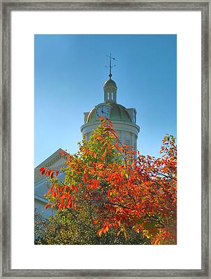 City Hall Dome And Tree  Framed Print by Steven Ainsworth