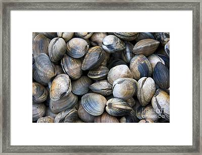 Clam Shell Background Framed Print by Jane Rix